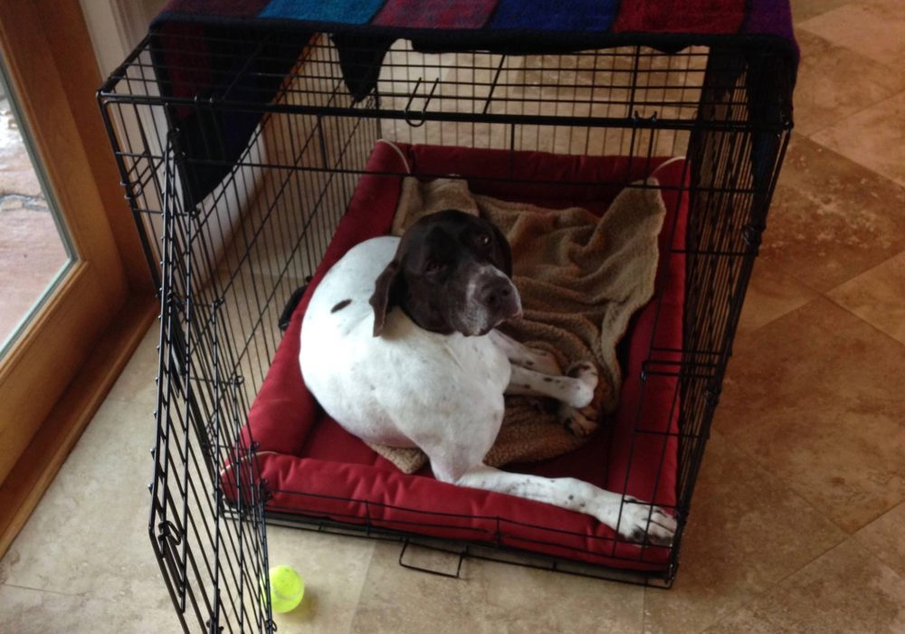 Should Crate Be Just Big Enough For Dog To Sleep