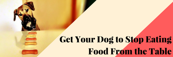 How To Stop Your Dog From Eating Food Off The Table Dog