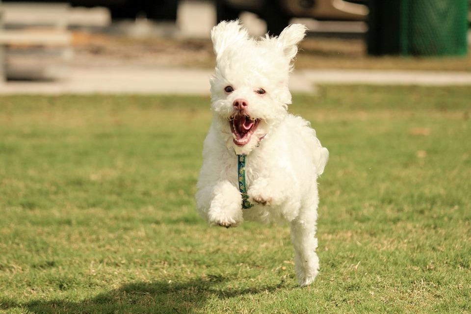 Dog Training Methods Without Treats