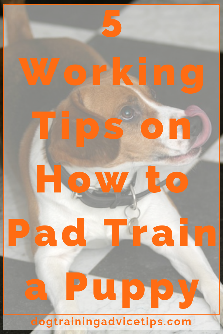 How To Puppy Pad Train A Dog
