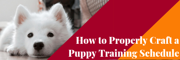 How to Properly Craft a Puppy Training Schedule - Dog