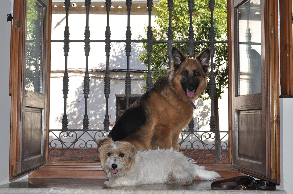 7 Steps To Stop Your Dog From Barking At The Front Door Dog