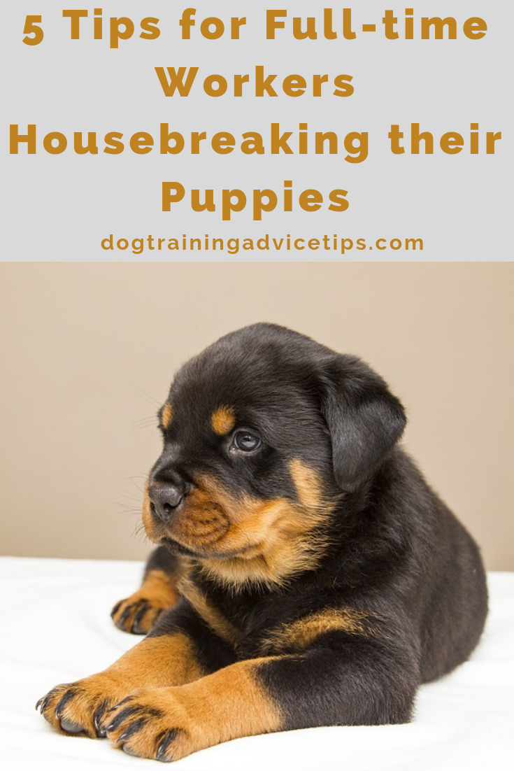 5 Tips For Full Time Workers Housebreaking Their Puppies Dog