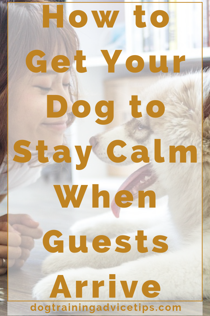 How to get your dog to stay calm